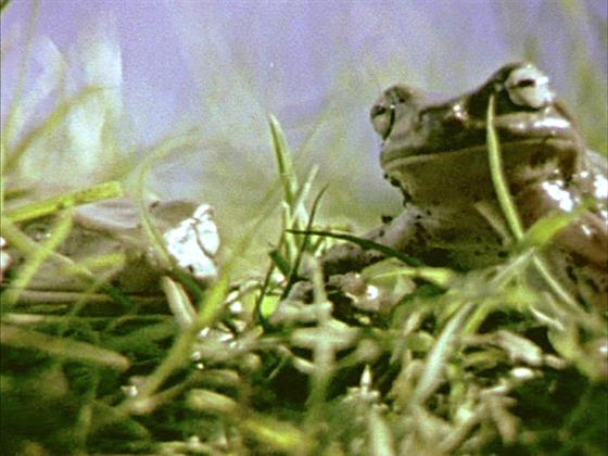 frog_jesus_still2_blownup.jpg