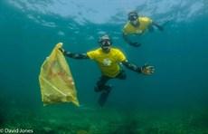 Freedivers-collecting-plastic-waste_thumb.jpg