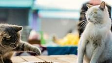 t-kedi-istanbul-cats_thumb.jpg