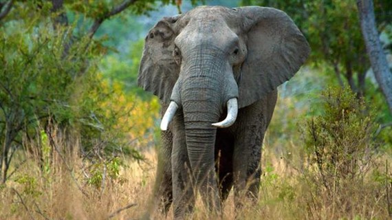 POWER OF NATURE Elephants: Mega-gardeners of the Forest