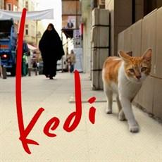 kedi_3_thumb.jpg