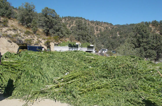 Marijuana Grows and Restoration