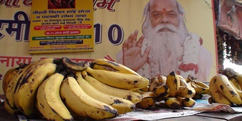 Mondo Banana.jpg