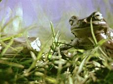 frog_jesus_still2_blownup_thumb.jpg