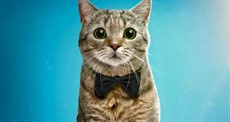 Cat-Film-Fest-posterCROP_thumb.jpg