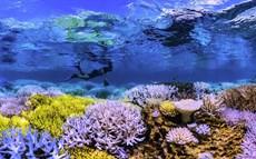 fs_chasing_coral_800_thumb.jpg