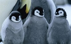 fs_march_of_the_penguins_800_thumb.jpg
