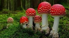 Fantastic-Fungi-800x523_thumb.jpg