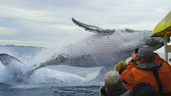 Humpback Whales: A Detective Story + Every Nine Minutes