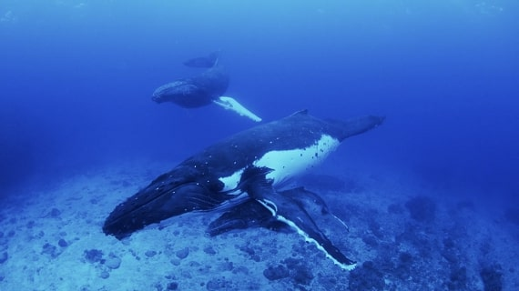 Wild Windows: Whales