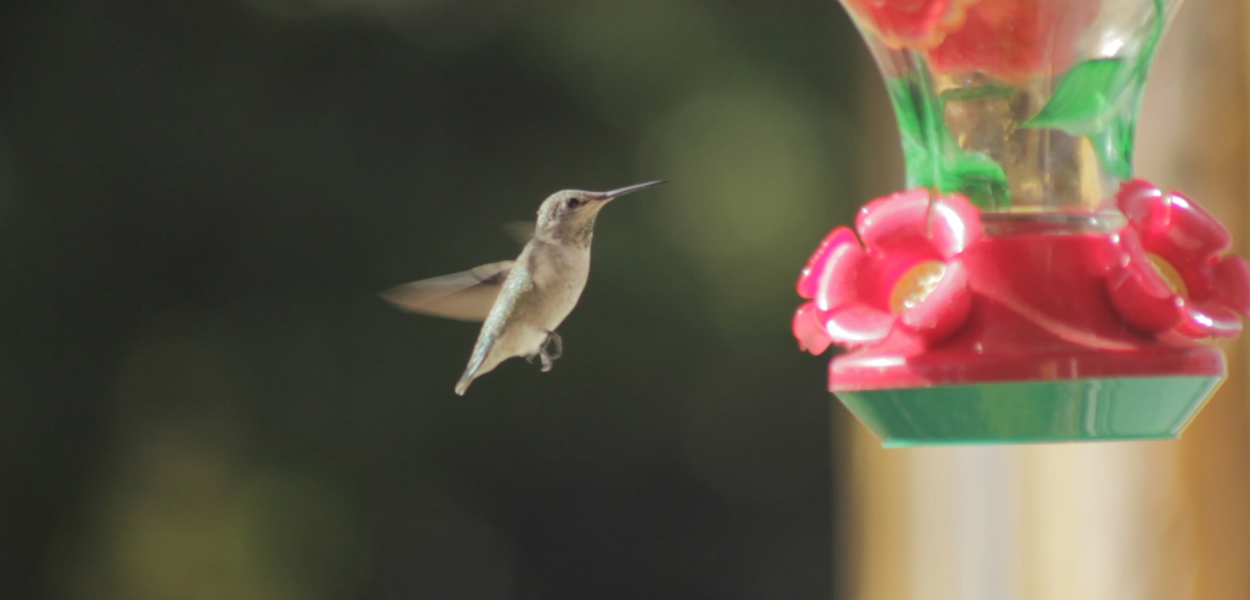 mspfilm-cine-latino-song-hummingbird-still-1.jpg