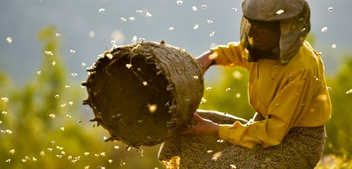 mspfilm-honeyland-still-1_thumb.jpg