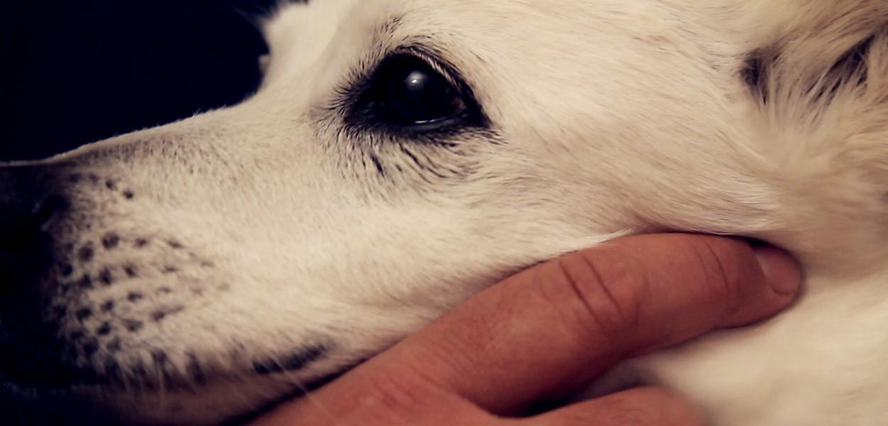 mspiff-2017-white-dog-still-1.jpg