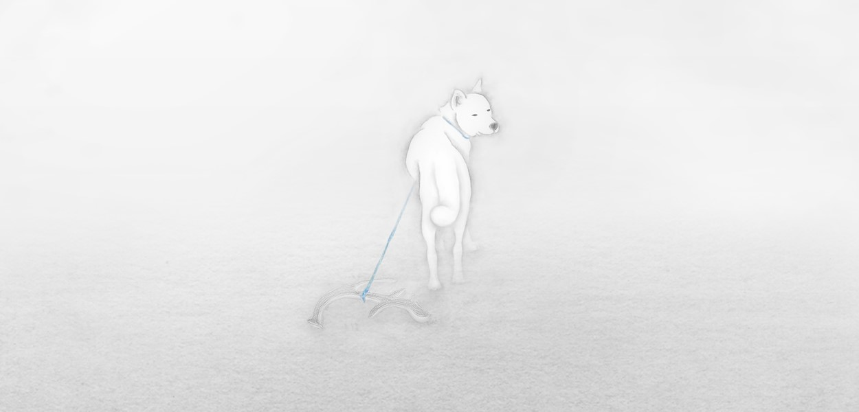 a White Dog over the Fog
