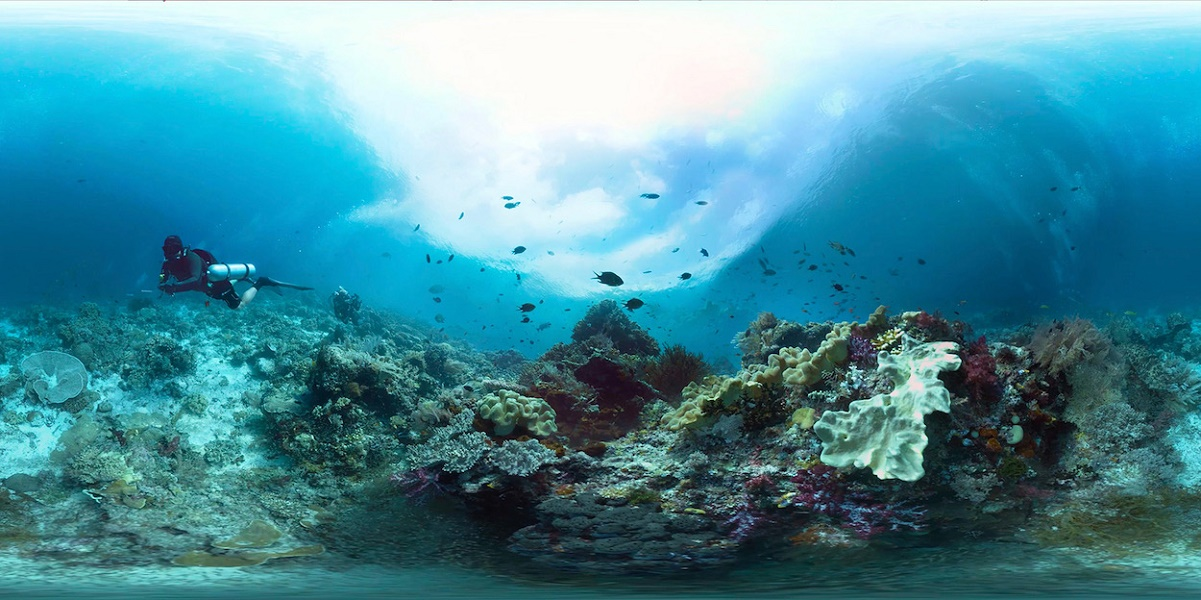 360 Coral Reefs - Life below the surface