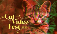 CatVideoFest2020Thumb.jpeg