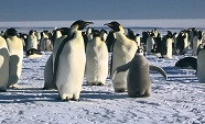 March of the Penguins.crop.jpg