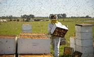 PollinatorsThumb.jpg